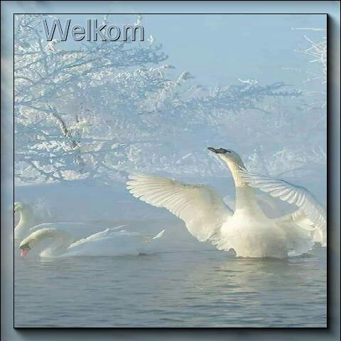 Set-Winter+zwaan-we…